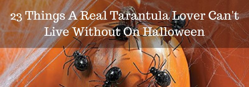 23 Spider Things A Real Tarantula Lover Can't Live Without On Halloween